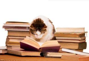 CatReadingBook