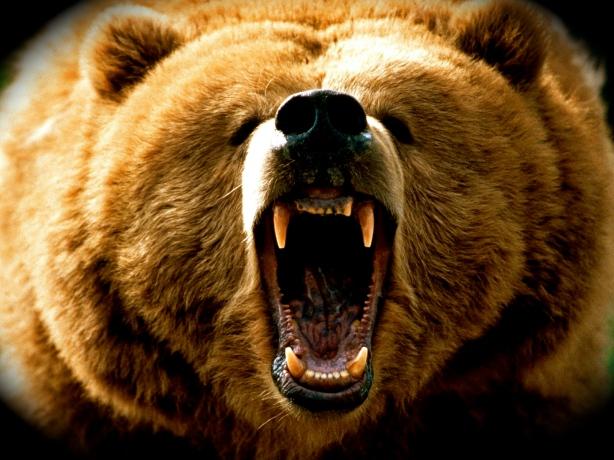 lovelydisgrace-com-grizzyl-bear-attack-4